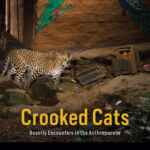 Online book talk: Nayanika Mathur, Crooked Cats